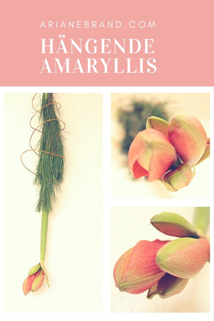 Hängende Amaryllis